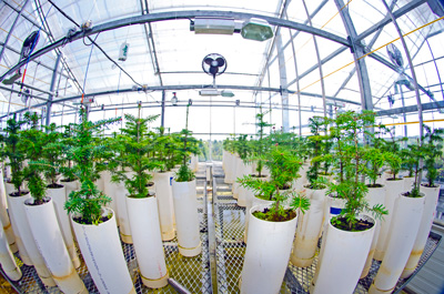 a fish eye view of the greenhouse